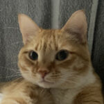 Profile photo of sadot002